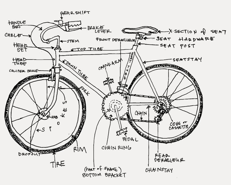 anatomy bike anatomy diagram davis bike collective
